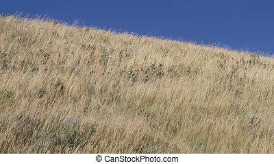 herbe prairie, vent, 05