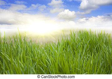 herbe, printemps, ciel bleu