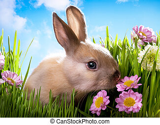 herbe, printemps, vert, lapin, bébé, fleurs, paques