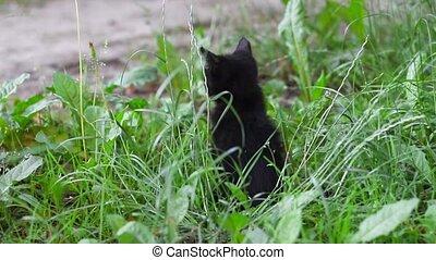 herbe, regarde, chaton, frais, noir, adorable, autour de, séance