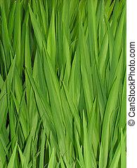 herbe, roseaux