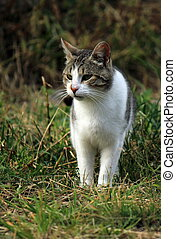 herbe sauvage, chat