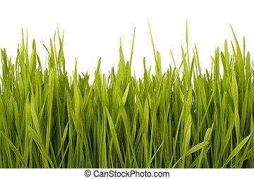 herbe, silhouette