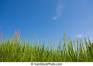 herbe, sky.