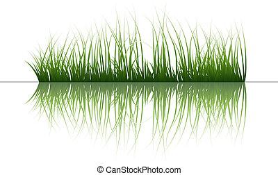 herbe, sur, eau