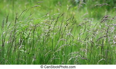 herbe, tige, pré, unmoving