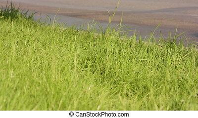 herbe, vert, bord route