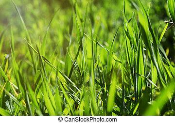 herbe, vert, fond,  nature
