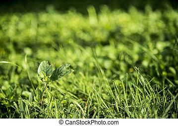herbe, vert, fond
