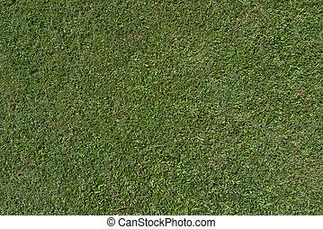herbe, vert, fond,  texture,  nature