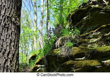 herbe, vert, forêt, Arbres