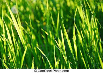 herbe, vert