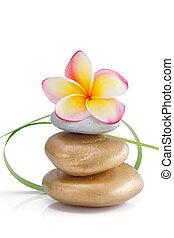 herbe, vert, pierres, fleur, décoration, frangipanier, petit