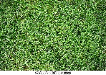 herbe, vert, texture, fond