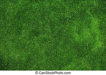 herbe, vert, texture