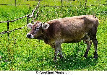 herbe, vert, vache