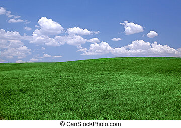 herbe verte, bleu, ciel