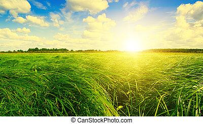 herbe verte, champ, et, forêt, sous, coucher soleil, soleil, sur, bleu, sky.