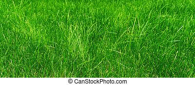 herbe verte, ensoleillé, pré, jour