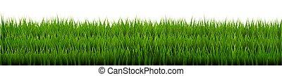 herbe verte, frontière