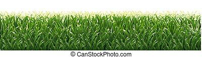 herbe verte, frontière, fond