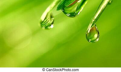 herbe, waterdrops