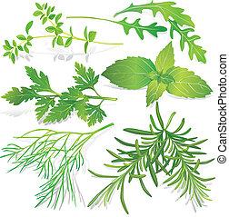 herbes, collection, frais