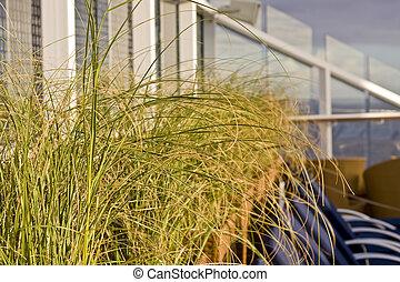 herbes, croisière bateau