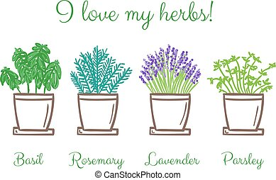 herbes, ensemble, pots, frest, jardin