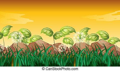herbes, grand, rochers