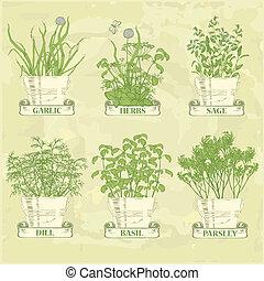 herbes, pot