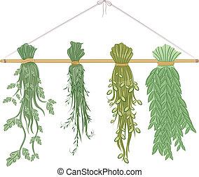 herbes, sécher