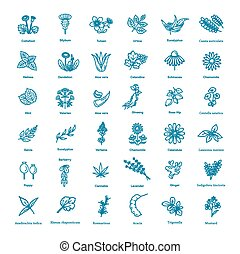 herbes, sain, fleurs, collection., monde médical