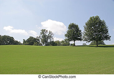 herbeux, arbres, colline
