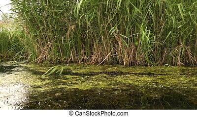 herbeux, eau, au-dessus, dépassement, encore, riverbank