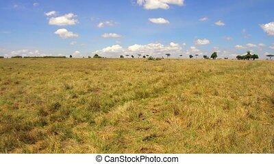 herbivore animals grazing in savanna at africa