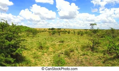 herbivore animals in savanna at africa - animal, nature and...