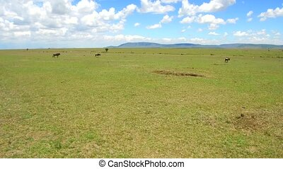 herbivore animals in savanna at africa - animal, nature,...