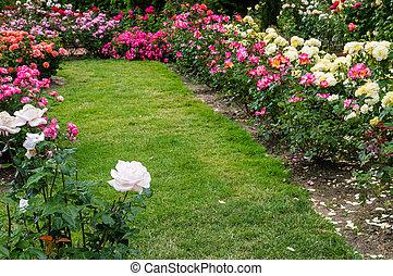 herboso, camino, por, un, rosa, jardín
