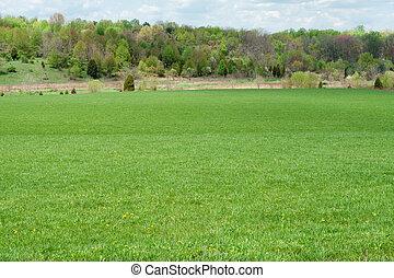 herboso, campo verde, dientes de león, línea árbol,...