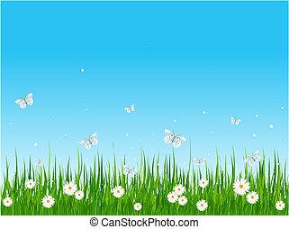 herboso, campo, y, mariposas