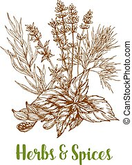 Herbs and herbal spices vector sketch
