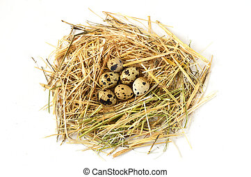 Herbs and plants in the quail's egg, bird's nest and eggs, pictures of quail's eggs in the nest