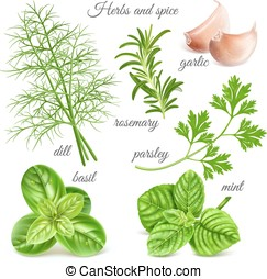 Herbs and spice - Big herbs and spice collection. Vector...