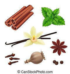 Herbs and spices. Cinnamon vegan leaves fresh vanilla seeds for cooking vector herbs realistic collection
