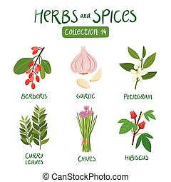 Herbs and spices collection 14