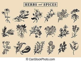 Herbs and spices set. Hand drawn officinalis, medicinal,...