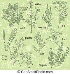 Herbs and spices set in vector. Mint