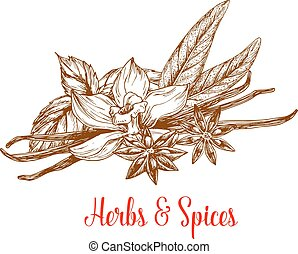 Herbs and spices sketch with mint, vanilla, anise - Herbs...