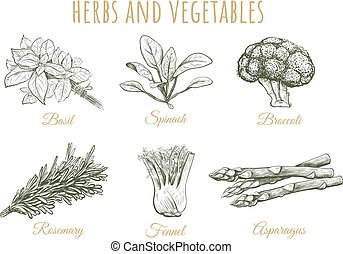 Herbs and vegetables sketch collection
